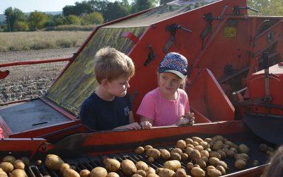 Kartoffelernte bei Bauer Tarner